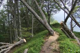 N°27/ Vu de l'autre côté, le tronc encombre encore la moitié du passage, le plus pénible a été de monter la tronçonneuse jusqu'ici, dommage de revenir pour terminer la belle ouvrage !