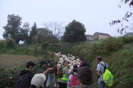Remontée vers les hameaux disséminés d'Estialescq