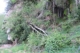N°15/ Deux arbres en suspend à dégager au bord de la cascade.