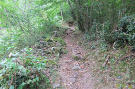 N°42/ Ensuite le chemin s'enfonce secrètement sous le couvert de Busteigt, sur un lit de feuilles mortes...