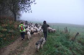 Du haut des coteaux de Goès nous ne verrons ni les Pyrénées, ni les coteaux d'Estialescq, mais serons guidés par les marques du Chemin de Compostelle.