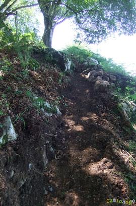 N°7/ Juste avant la sortie du bois sous un gros hêtre, un brin de sentier est repioché de frais !