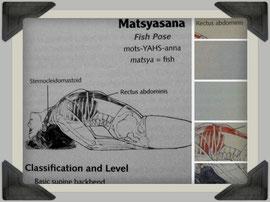 Foto aus: Yoga Anatomy von Leslie Kaminoff