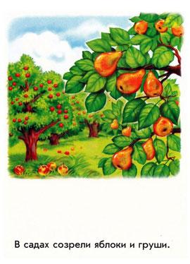 В саду созрели яблоки и груши