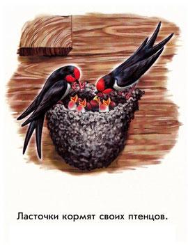 Ласточки кормят своих птенцов