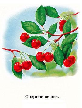 Созрели вишни