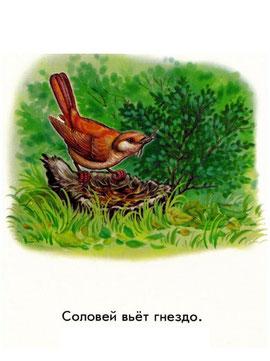 Соловей вьёт гнездо