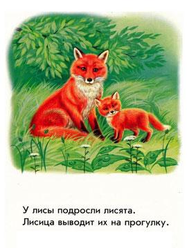 У лисицы подросли лисята