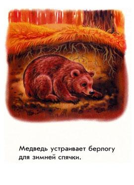 Медведь устраивает берлогу для зимней спячки
