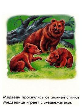 Медведи проснулись от зимней спячки