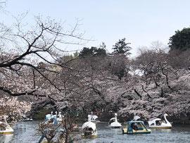 (イメージ画像:都立井の頭恩賜公園。2019年撮影)