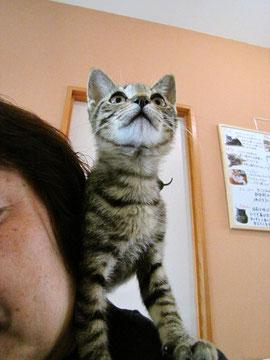 子猫ちゃんに好かれました(爆)