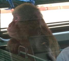 これは偶然見かけたお猿さんねw