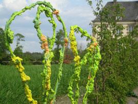 le jardin des algues