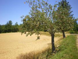 Les fruitiers, éléments du paysage et du patrimoine