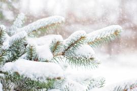Nadelbaum Schnee Winter Klangpraxis Doris Lettner 4341 Arbing