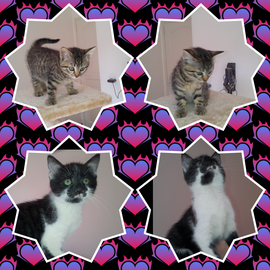 2 chatons - FA Lydie