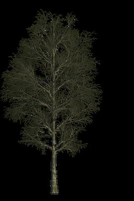 Baum Textur im Winter freigestellt für Architekturvisualisierungen und Animationen
