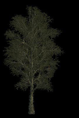 Baum Textur im Winter freigestellt für Visualisierungen und 3d Animationen