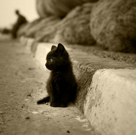 黒猫の画像