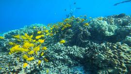 ハワイ島の美しい海でシュノーケル
