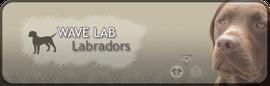 Wave Lab Labradors