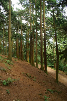 Photograph taken 2007 on the Lickey Hills by houghtonabout on Flickr reproduced under Creative Commons Licence: Attribution-Noncommercial-Share Alike 2.0 Generic.