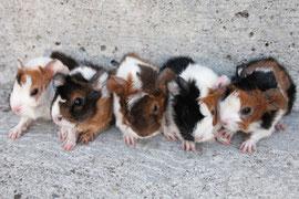 Ella, Zappo, Kasimir, Nelson und Cochine