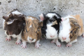 Amanda, Carmelo, Romeo und Sidd