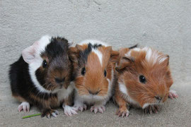 Leona, Dean und Jelana