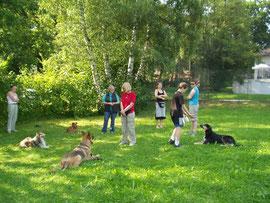 Hundeschule auf öffentlicher Wiese