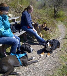 Hundespaziergang Dogwalker Buchen Sie gleich Ihren Wunschtermin Abholservice