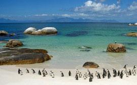Boulder Beach à Cape Town (Afrique du Sud)