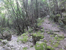 Im korfiotischen Urwald