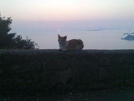 Sundown über den diapontischen Inseln mit Katze