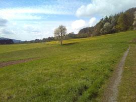 Odenwaldidylle bei Eberbach