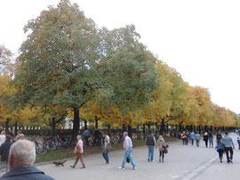 HHerbststimmung im Hofgarten