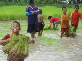 田植えに励む子どもたち。