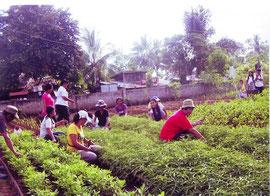 オイスカスタッフは子どもたちのへの有機農業の指導を行いました