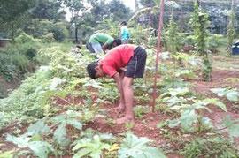 野菜の成長具合はどうでしょうか
