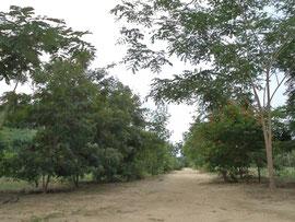 大きく成長した木々が校舎へと導いてくれます。