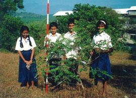 学校の隣の公園へ植林