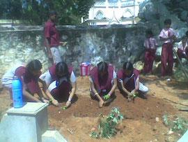 丁寧に一本一本、女の子たちが植林します