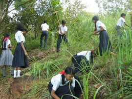 固い土を掘るのは男の子が頑張ってくれました。
