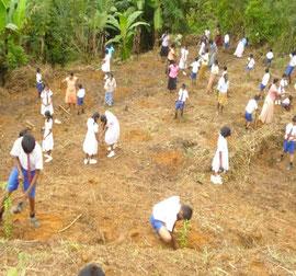 地域の人たちも一緒に大人数で植林しまた。