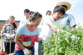 エミューの餌用に植えた菜の花が砂漠化防止につながるかもしれないと興味津々