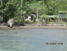 海岸が浸食され木が倒れ、海が学校近くに迫る。