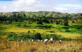 2008年の植林の様子