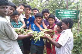 立派なオクラの収穫に喜ぶ子どもたち