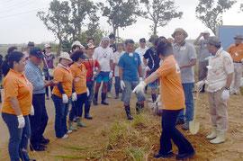 サンゴを守ろうと、3千平方㍍ほどのサトウキビ畑の周りに月桃を植え付ける参加者=白保